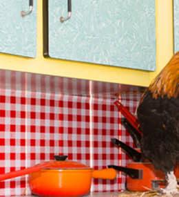 Poules cuisine jardins de brocéliande