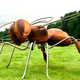 INsect'Inside expo 2020